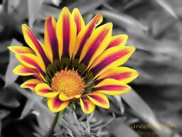 Flower Colourful, by MariamMohammed
