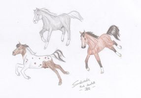 Foals: Three hanoverians by Salvada