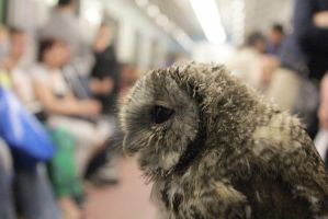 Owl rides the subway by MyBlackPrince