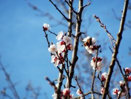 about spring. by awfultosee