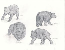 BEARS by IndifferentSociety