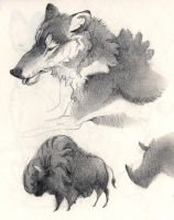 Sketchbook: Wolf and Bison by Rowkey