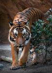 On the Prowl by DeniseSoden