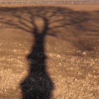 Rorschach Tree by TomNL