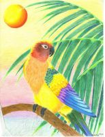 Sun conure by RavensLament