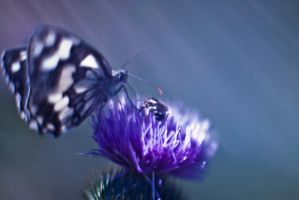 Butterfly by D250Laboratories