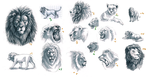 Lion Studies by Feyrah