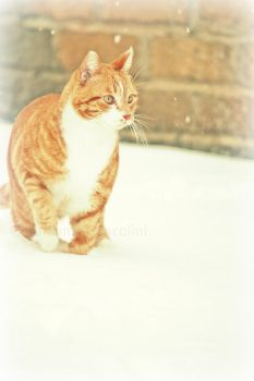 cat in to the snow by RecreatingTheWorld