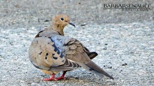 Beautiful Dove by TearsofEndearment