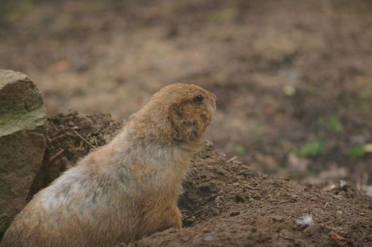 Groundhog II by expression-stock