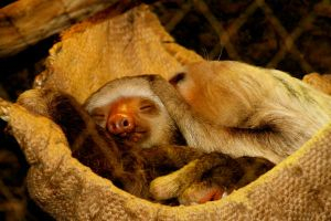 sloths will make you happy. by ashesanddisarray