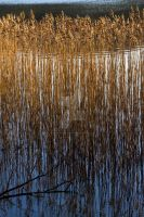 Lake by ColorsPictur