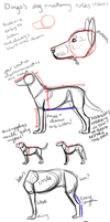 dingo's dog anatomy rules (it does) by DingoMutt