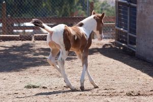 HORSE STOCK - Foal 5 by kittykitty5150
