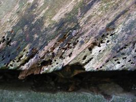Rotten Wood by bombstock