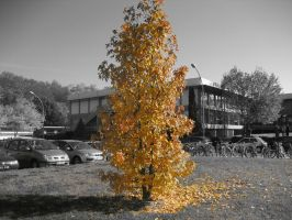 My Yellow Lonely Tree by Ceejay8887