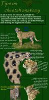 cheetah anatomy tutorial by cheetahsintheearth