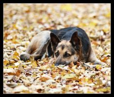 Autumn dog by Alexandra35