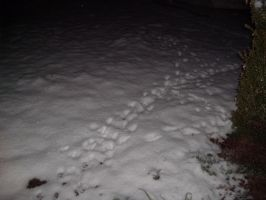 Frozen pawprints 2 by Ironhold