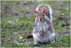 Have You Got The Nuts. by andy-j-s