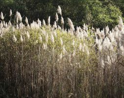 Bonnefont marshes 06 by HermitCrabStock