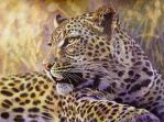 Leopard 2 by WillemSvdMerwe
