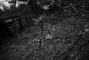 No Title IV by emptyremains