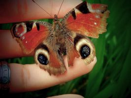 small butterfly by Pauline-graphics