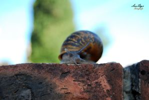 Caracol by Bonfire22