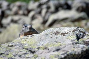 Playing hide and seek with marmots... by Seb-Photos