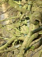 sunny branches by harrietbaxter