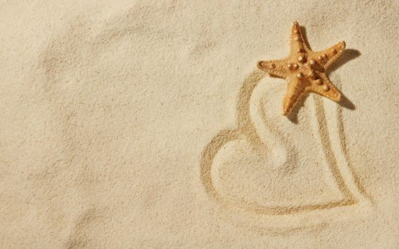 Starfish Beach Heart HD Wallpaper - LoveWallpapers by thevampier1