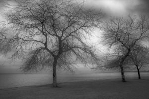 Bare Trees by lightzone