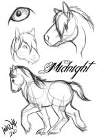 Midnight by IndiWolfOnline
