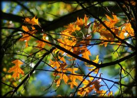 Autumn by Pentagon 300mm by pagan-live-style
