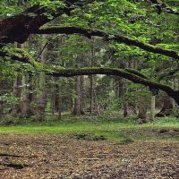 Old Forest by sternenfern