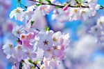 Spring has Sprung by Sjem20