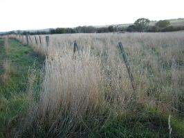 another fence by serp-stock