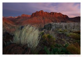 Kolob Dreams by Ian-Plant