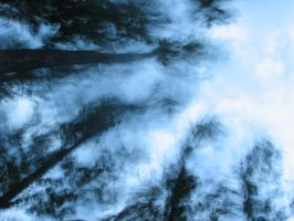 Ghost Trees in the storm by Zackary