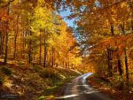 Autumn journey pt.XI. by realityDream
