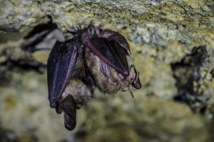 Bats in the cave by izzzwerg