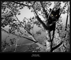 Cat in tree by zurga