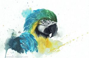 Blue and Yellow Macaw by HanaTokei