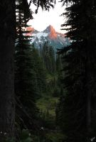 Mt Rainier National Park 3 by warui-shoujo