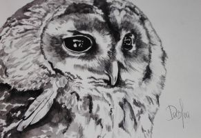 my owl by Denor