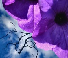 blossoms out of darkness color by dissenters101