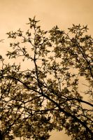 sepia flowers by detihw