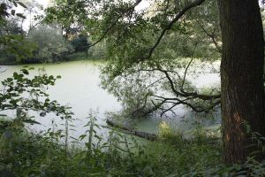 Abandoned Pond by pelleron-stock
