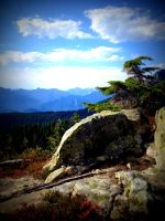 Rock and Tree On Alouette Mountain by Westcoastspirits